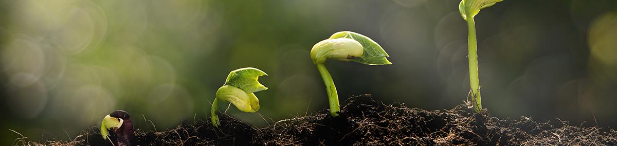 New plants poking through the soil
